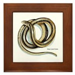 Glass Lizard Snake Framed Tile