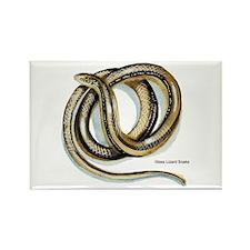 Glass Lizard Snake Rectangle Magnet