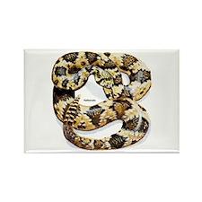 Rattlesnake Snake Rectangle Magnet