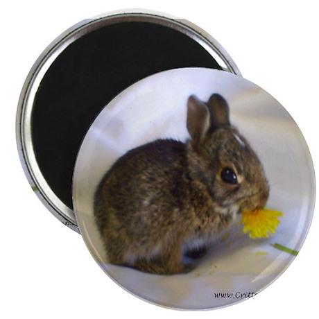 """Hoppity 2 2.25"""" Magnet (100 pack)"""