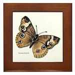 Buckeye Butterfly Framed Tile
