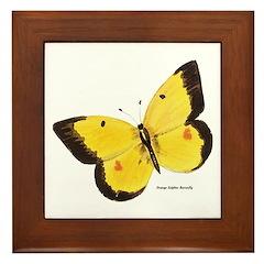Orange Sulphur Butterfly Framed Tile