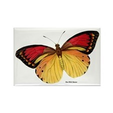 Red Yellow Butterfly Rectangle Magnet