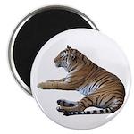 tiger7 Magnet