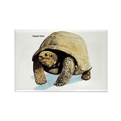 Galapagos Tortoise Rectangle Magnet