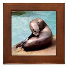Sea Lion with an Itch Framed Tile