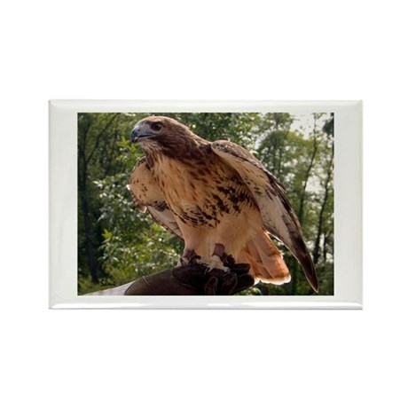 Red Tailed Hawk Ruffled Feath Rectangle Magnet