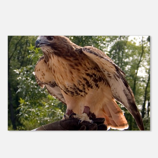 Red Tailed Hawk Ruffled Feath Postcards (Package o