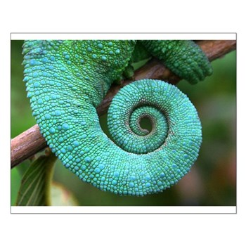 Poster of Chameleon Tail of Hawaii, Mary Lovein