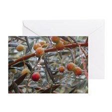 Rain & Olives Holiday Cards (Pk of 20)