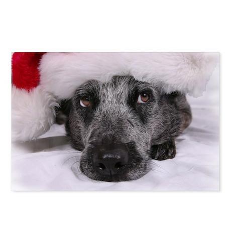 Christmas Blue Heeler Postcards (Package of 8)