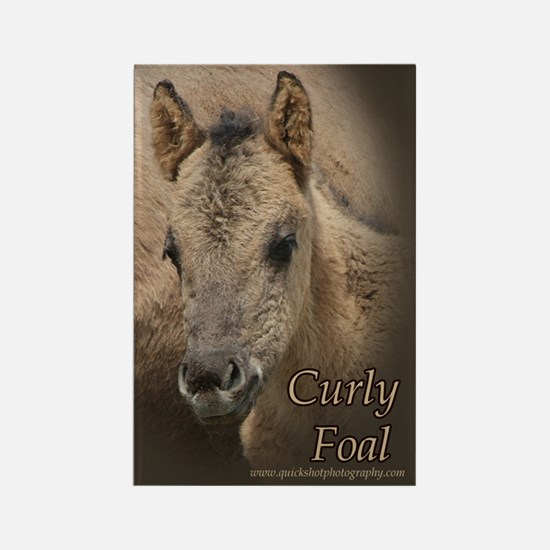 Curly Foal Rectangle Magnet