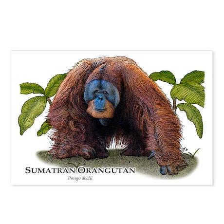 Sumatran Orangutan Postcards (Package of 8)
