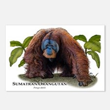 Sumatran Orangutan Postcards (Package of 8)