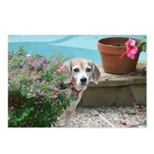 Beagle Buddies Postcards (Package of 8)