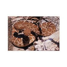 Desert Rattlesnake Rectangle Magnet