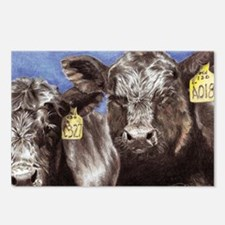 """Brothers,"" Angus Bull Calves Postcards (Package o"