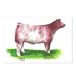 Shorthorn Steer Postcards (Package of 8)