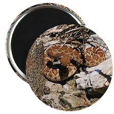 Desert Rattlesnake Magnet