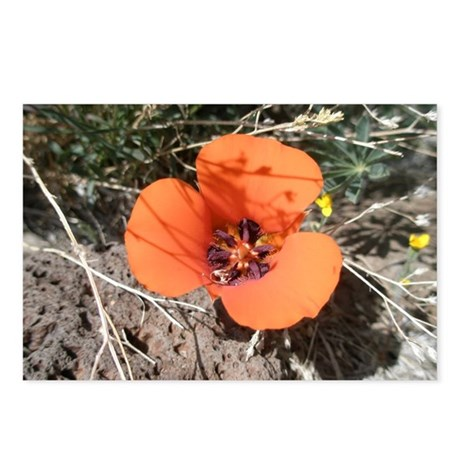 Desert Wildflower Postcards (Package of 8)