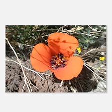 Desert Wildflower Postcards (Package of 8)