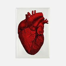 Vintage Anatomical Human Heart Rectangle Magnet