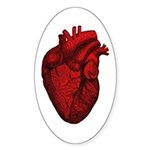 Vintage Anatomical Human Heart Oval Sticker