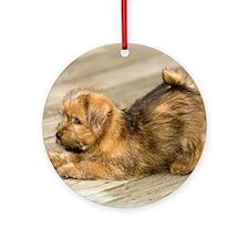 Playful Norfolk Terrier Pup Keepsake (Round)