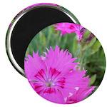 """Purple Flower Blossom 2.25"""" Magnet (10 pack)"""