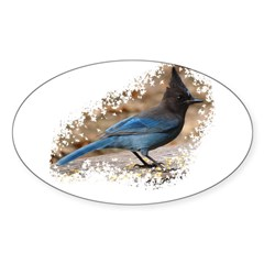 Steller's Jay Oval Decal