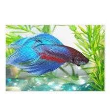 Cute Betta fish Postcards (Package of 8)
