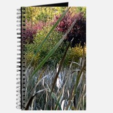Fall Colors and Cattails Journal