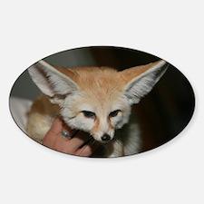Flash the fennec fox Oval Decal