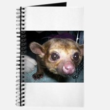 Guinness the kinkajou up clos Journal
