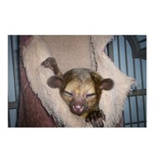 Guinness the kinkajou snoozin Postcards (Package o