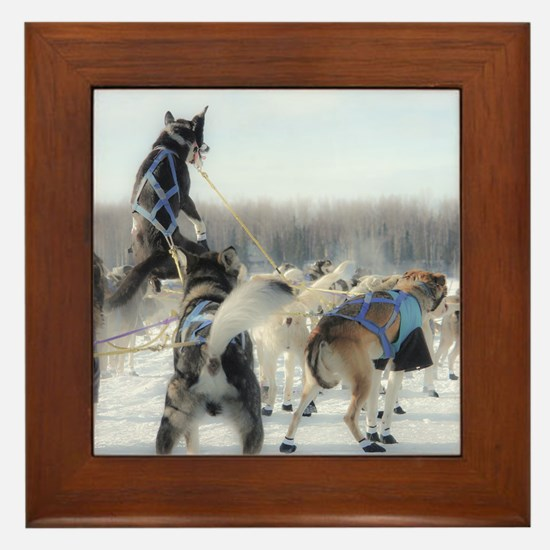 Funny Sled dogs Framed Tile