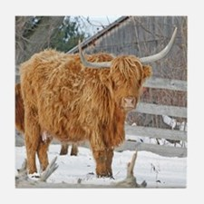 Highland Cattle Tile Coaster