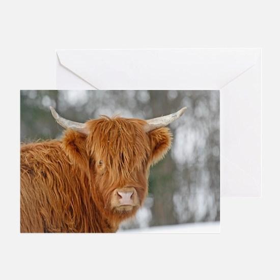 Highland Heifer Greeting Card