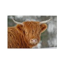 Highland Heifer Rectangle Magnet