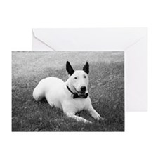 Formal Bull Terrier Black and White Greeting Card