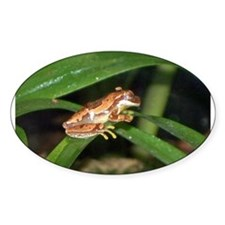 hourglass treefrog Oval Decal