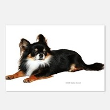 Chihuahua (photo) Postcards (Package of 8)