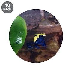 poison dart frog 3.5