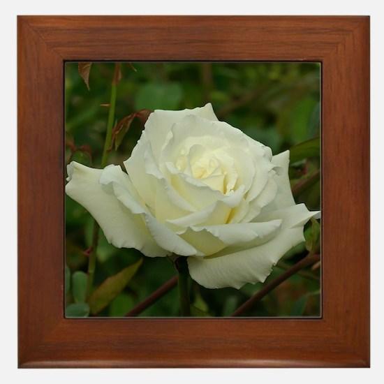 White Rose Framed Tile