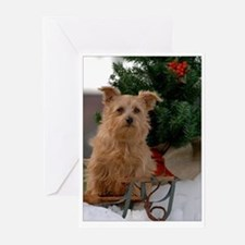 Norfolk Terrier Season's Best Greeting Cards