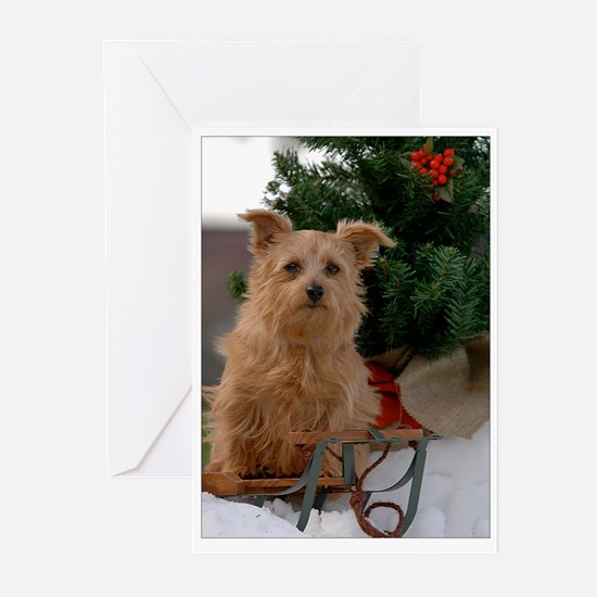 Norfolk Terrier Season's Best Greeting Cards