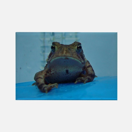 toad2 Rectangle Magnet