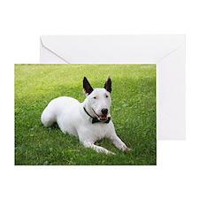 Formal Bull Terrier Color Greeting Card