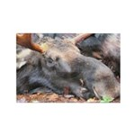 moose head Rectangle Magnet (100 pack)