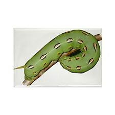 Helaine's Hornworm Rectangle Magnet